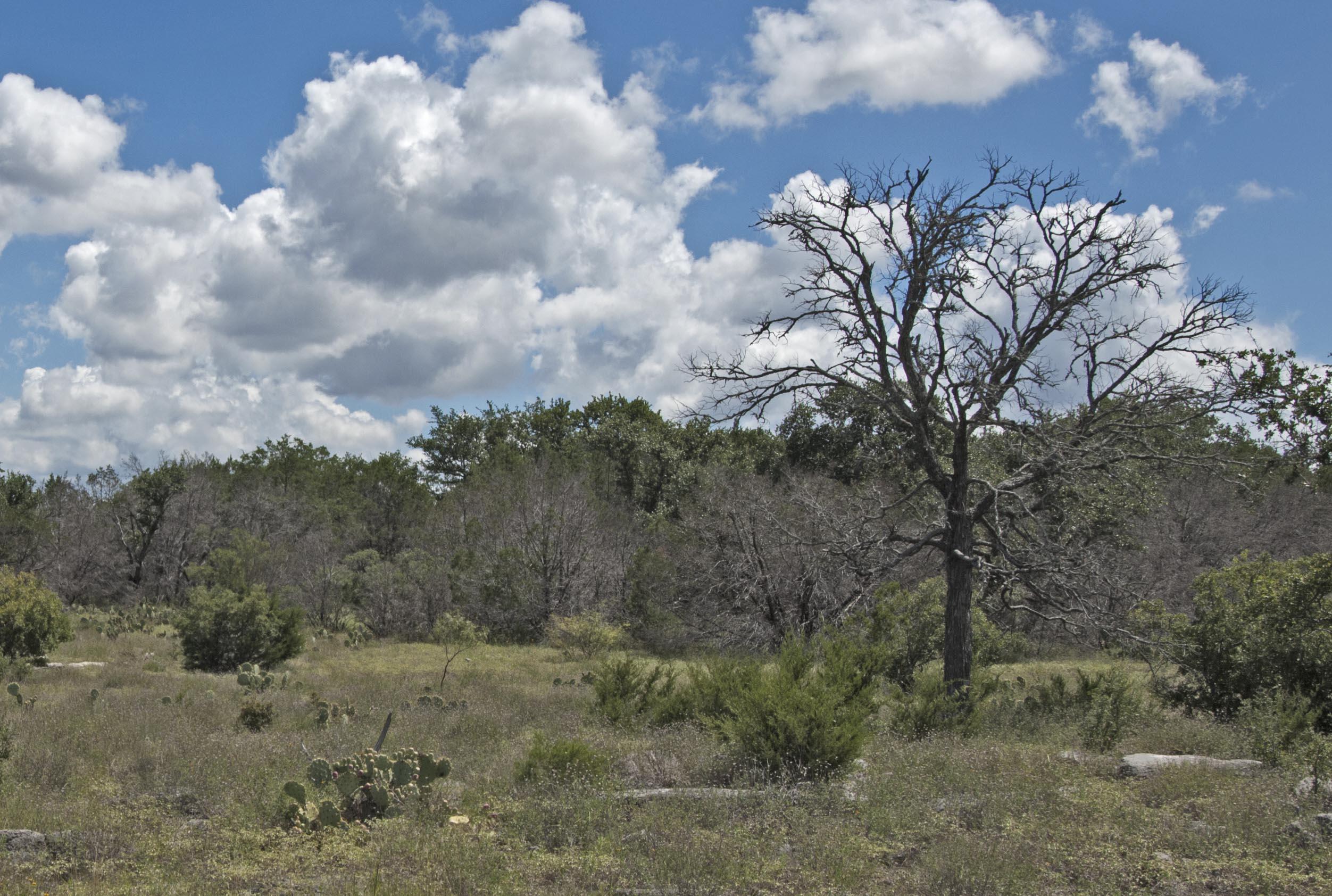 douyblehorn-treekill-dsc_0009