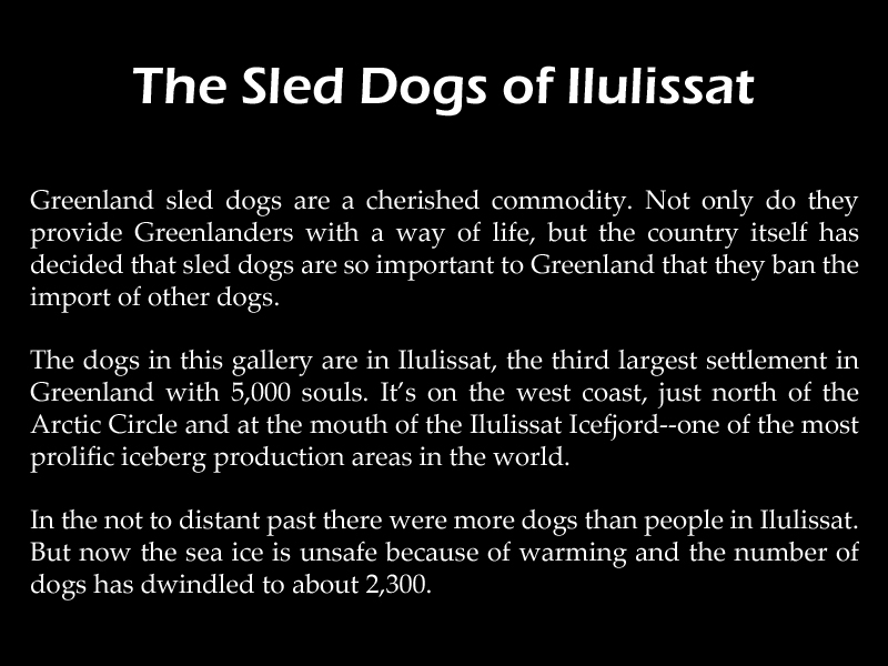 gallery-description-sled-dogs-of-ilulissat