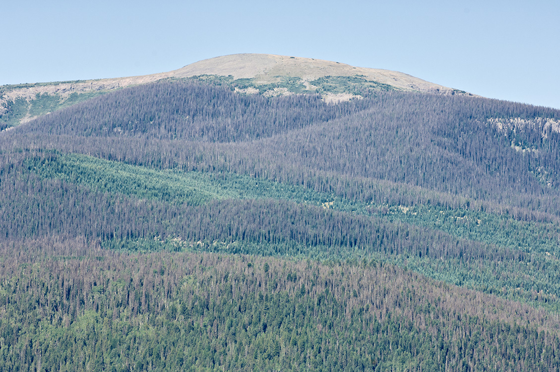 spruce-beetle-west-of-creede