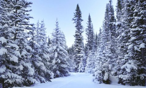 0114030409 Blue Spruce Snow 4000dpi processed 120107 2