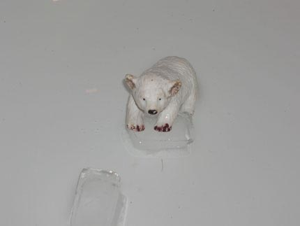baby polar bear greenpeace credit